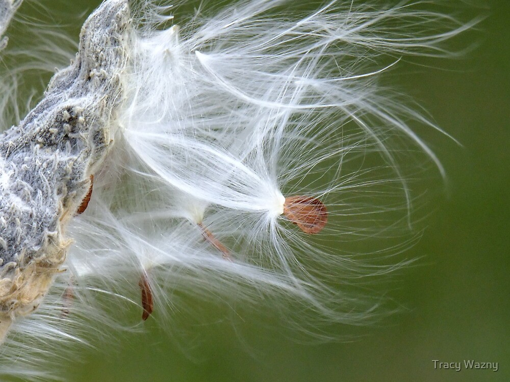 In The Breeze by Tracy Wazny