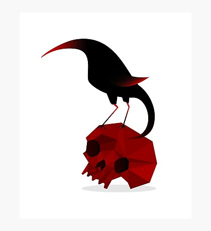 Bird and Skull Photographic Print