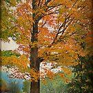 The Fay Tree by Deborah  Benoit