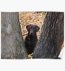 The Mocha in Chocolate Lab Poster