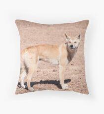 Dingo (Canis lupus dingo) Throw Pillow