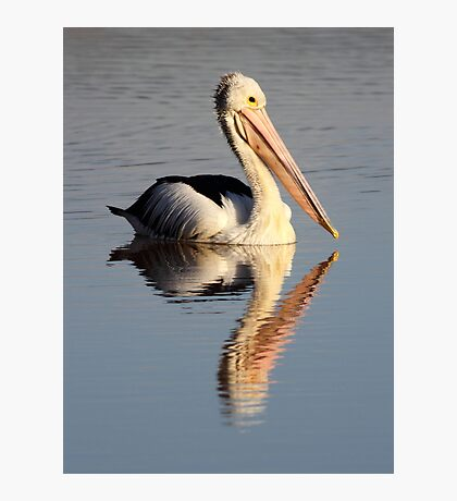 """Upon Reflection - A Pelican"" Photographic Print"