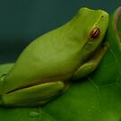 Green Tree frog by footsiephoto