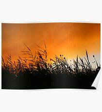 Whispering Reeds At Smokey Sunset Poster