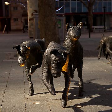 Canberra Dogs by joffotron