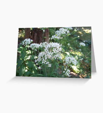 Fall Chive Blossoms Greeting Card