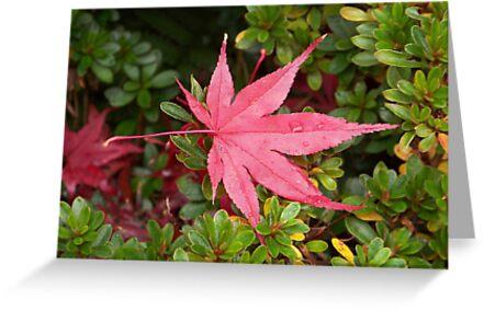 Japanese Maple Leaf by ninthcircle