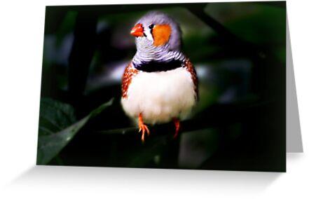 Mackenac birdie by Yool
