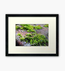 Tiny World Framed Print