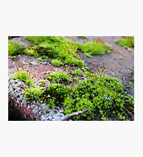 Tiny World Photographic Print