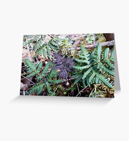 Purpley Fern Greeting Card