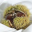 Chestnut by Patrick Reinquin