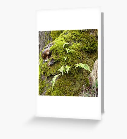 Licorice Root Fern Greeting Card