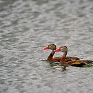 Synchronized Ducking by Charles  Murray