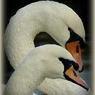 Mute swans by hanslittel