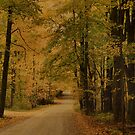 Autumn Country Road by Deborah  Benoit