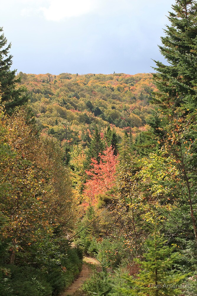 Fall Colors of Cape Breton  by Don Arsenault