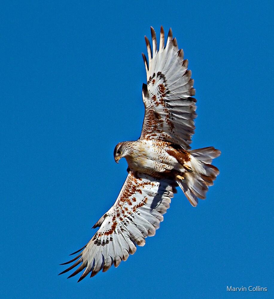 102112 Ferruginous Hawk by Marvin Collins