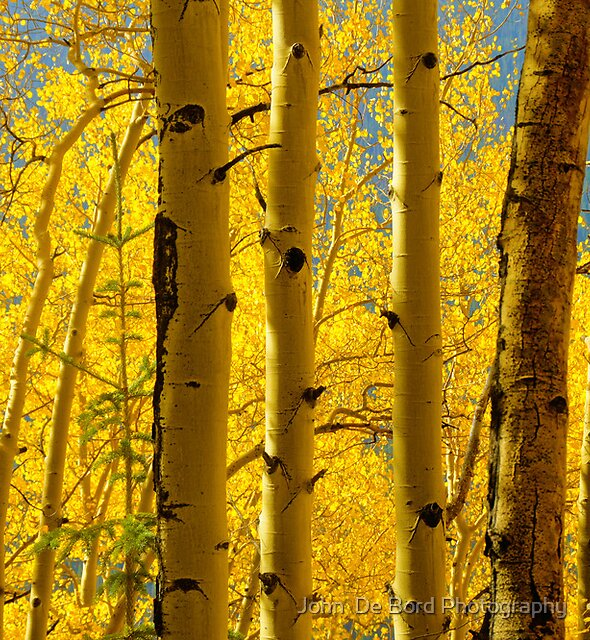Bathed In The Gold Of Fall by John  De Bord Photography