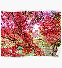 Candian Maples - Orton Effect Poster