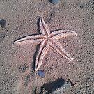 Starfish by DES PALMER