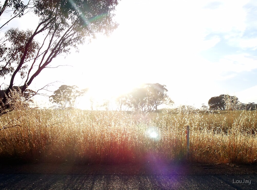 47/365 In the morning, the sun makes sparkles with the wild oats by LouJay