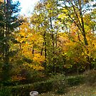 Backyard Fall Color by Fred Moskey