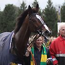 Head of a Champion by lulu kyriacou
