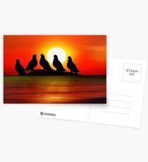 Birds at Sunset point Postcards