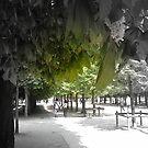 Jardin des Tuileries, Paris by graceloves