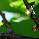 Sun-spun gum by Karen01