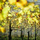2012 - at the vineyard by Ursa Vogel