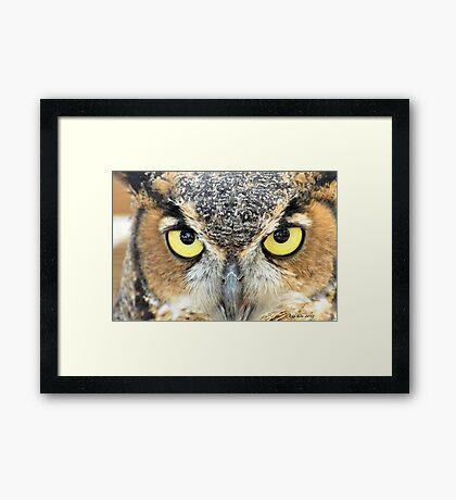 Great Horned Owl (Close up) Framed Print