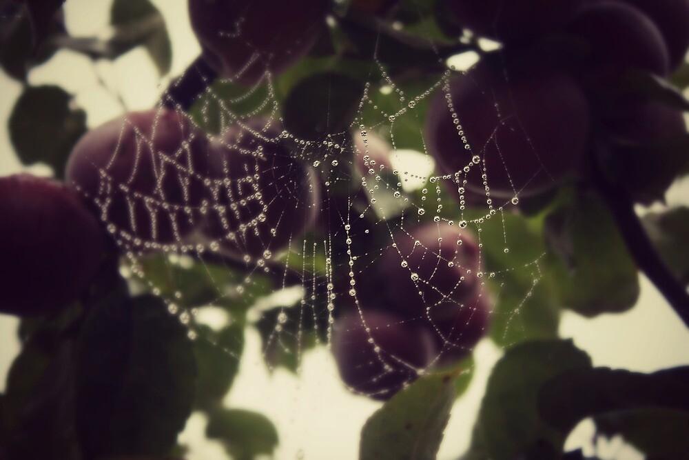 Webs among apples by Joshua Greiner