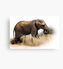 TOOTHLESS ELEPHANT Canvas Print