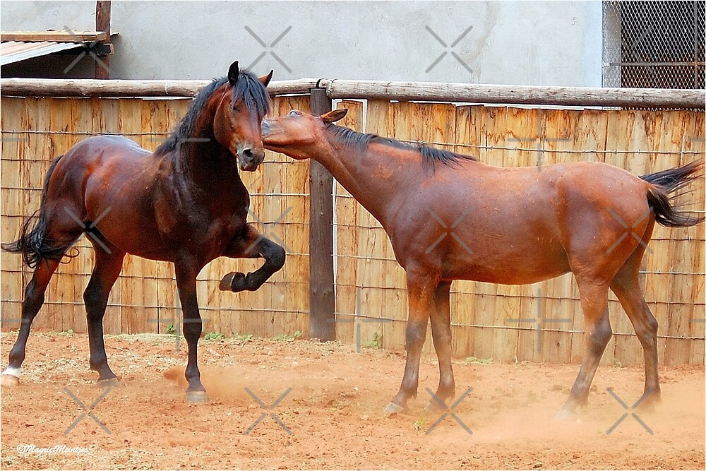 """PRINCE AND JOHNY -  """"funtime"""" by Magriet Meintjes"""