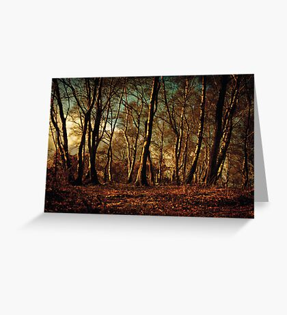 Autumn in the Forest Greeting Card