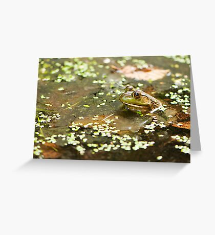 Frog in the Pond Greeting Card