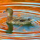 Duckcentric by Alex Call