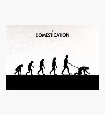 99 Steps of Progress - Domestication Photographic Print