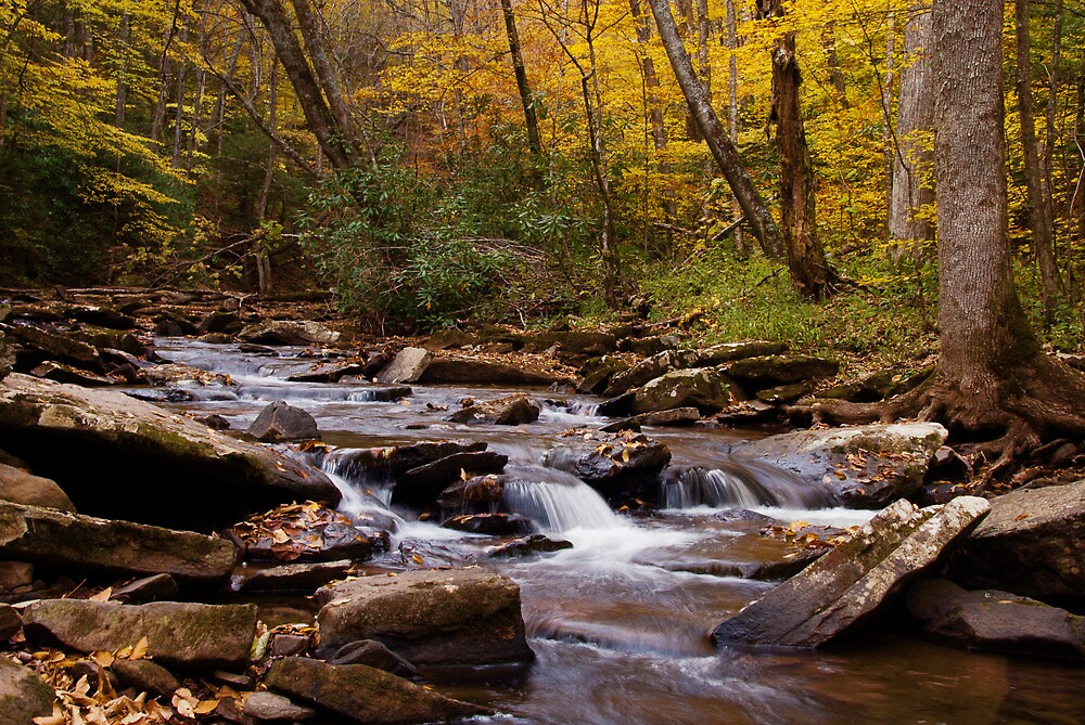 Hills Creek by Jeanne Sheridan