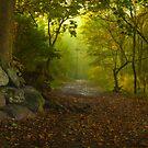 Lakeside Path, Ullswater by Brian Kerr