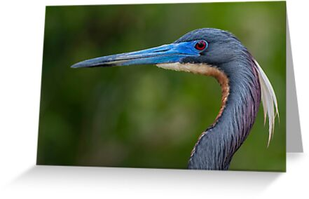 Tricolored Profile  by Daniel  Parent