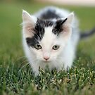 Exploring Kitten by CAPhotography