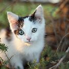 Kitten under a tree by CAPhotography
