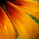 Yellow Flower by gregAllore