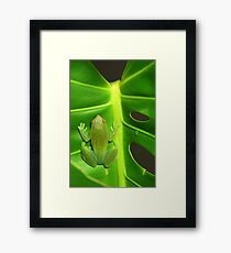 Greater Hatchet Faced Treefrog (Sphaenorhynchus lacteus)  Framed Print
