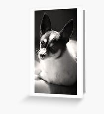 Eddie ~ Greeting Card