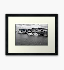 Seeking Sun Framed Print