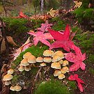 Autumn Floor by Patricia Jacobs DPAGB LRPS BPE4